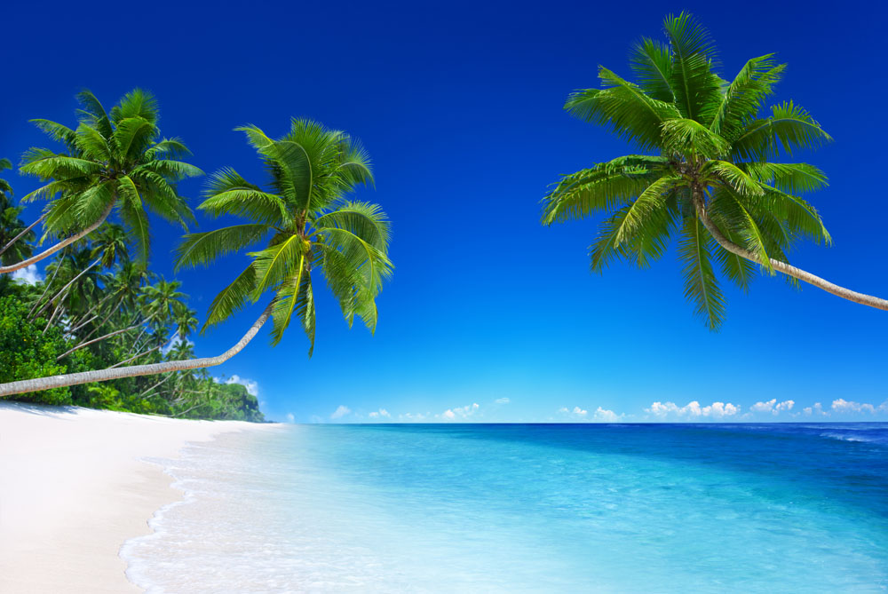 今日行程:美丽商城 -- 亚龙湾沙滩 -- 亚龙湾玫瑰谷 -- 三亚湾--夜游
